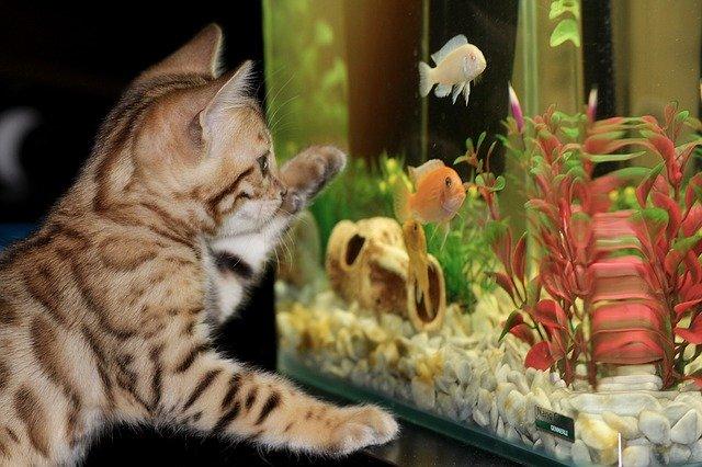 czyszczenie akwarium